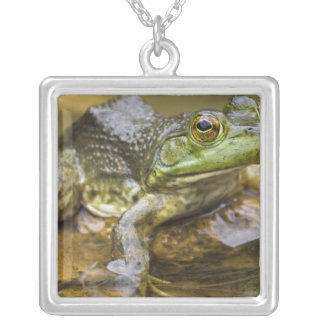 Frog along the Buffalo River, Mile 126 on the Square Pendant Necklace