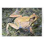 Frog (American Bull Frog) Cards