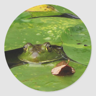 Frog and Lily Pads Classic Round Sticker