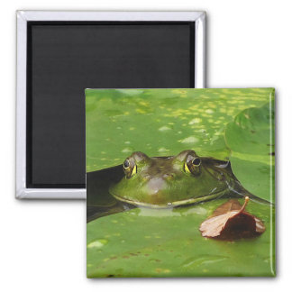 Frog and Lily Pads Magnet