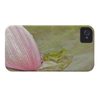 Frog and lotus flower petal, China, Case-Mate iPhone 4 Case