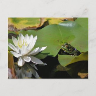 Frog And Water Lily Flower Photo Postcard postcard