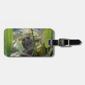 Frog Bag Tag