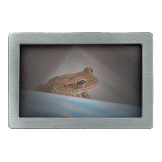 Frog behind blue neat animal amphibian photo belt buckles