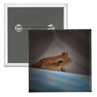 Frog behind blue neat animal amphibian photo pinback buttons