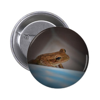 Frog behind blue neat animal amphibian photo buttons