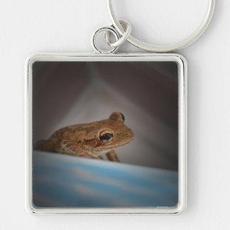 Frog behind blue neat animal amphibian photo keychains