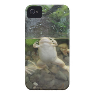 Frog Belly iPhone 4 Covers
