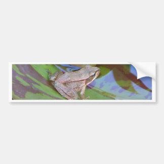 Frog Car Bumper Sticker