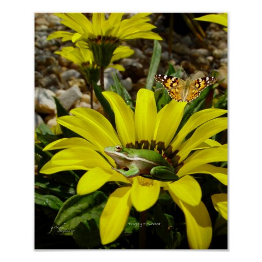 Frog butterfly Flowers Poster