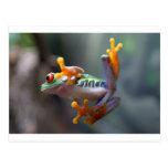 Frog by John Remar Jr. Post Cards