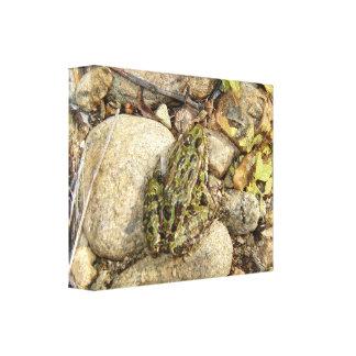 Frog Gallery Wrap Canvas