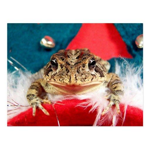 Frog Christmas , Tinsel, feathers, santa pattern Postcard