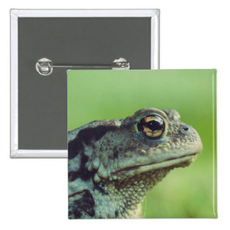 Frog close-up pinback button
