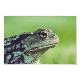 Frog close-up photo print