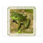 Frog Design Postcard