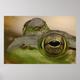 Frog Eye Posters