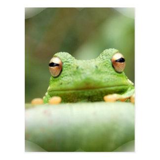 Frog Eyes Postcard