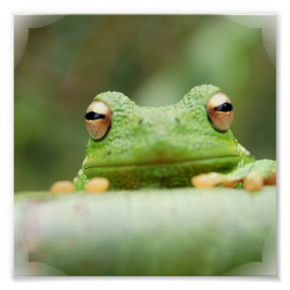 Frog Eyes Poster Print