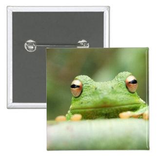 Frog Eyes Square Pin