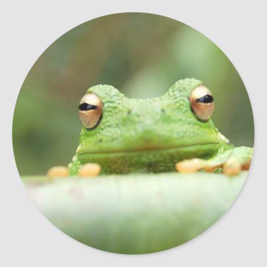 Frog Eyes Sticker