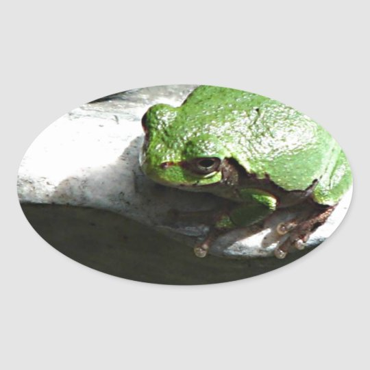 Frog Green Oval Sticker