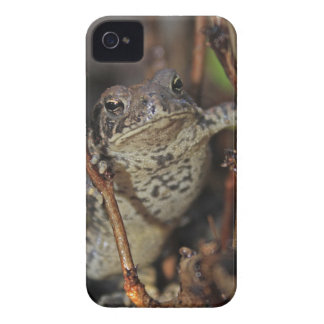 Frog Hanging Around iPhone 4 Cover