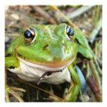 Frog Images Invitation