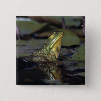 Frog in a pond button