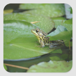 Frog in a Pond Square Stickers