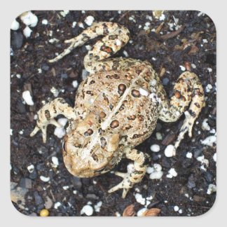 Frog in Camoflouge Square Sticker