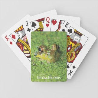 Frog in Green Algae Card Decks