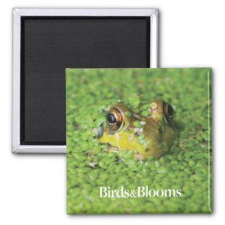 Frog in Green Algae Magnet