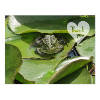 Frog in Green Looking at You Thank You Postcard