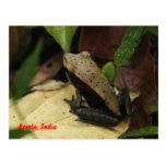 Frog in Kerala, India Postcards