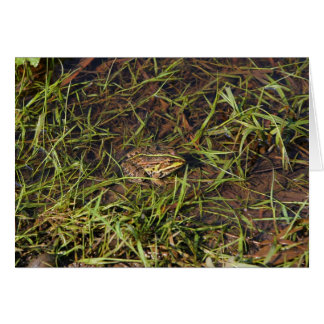 Frog in river card