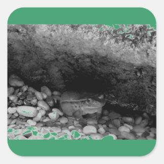 Frog in Stream B+W Square Sticker