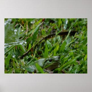 FROG IN THE GRASS IN RURAL QUEENSLAND AUSTRALIA PRINT