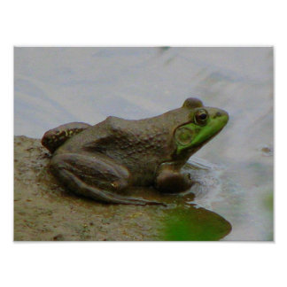 Frog in the Mud Poster