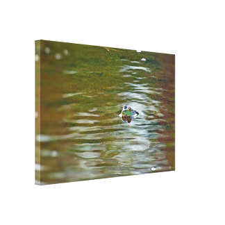 Frog in the water on stretched canvas gallery wrapped canvas