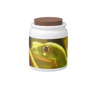 Frog Jar Candy Jars