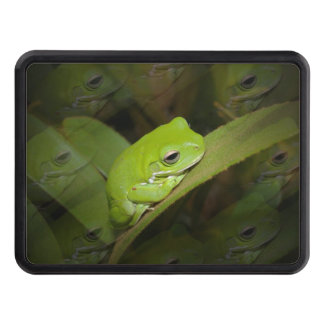 frog.jpg tow hitch cover