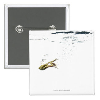 frog jumping and diving into the water pinback button