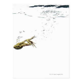 frog jumping and diving into the water postcard