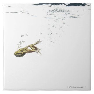 frog jumping and diving into the water tile