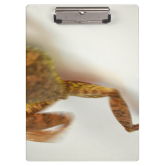 frog jumping towards left side animal amphibian clipboard