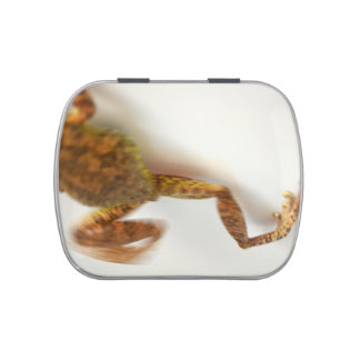 frog jumping towards left side animal amphibian jelly belly candy tins