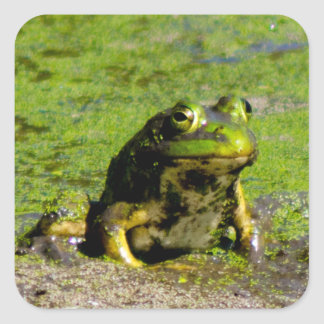 Frog Large Stickers