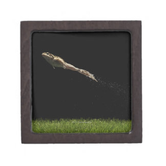 frog leaping off fresh green grass gift box