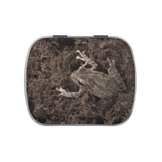 frog left on moss sepia tone candy tins